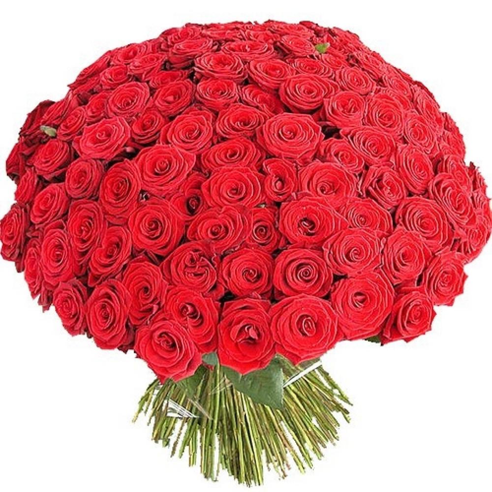 Букет из 101 розы (60 см) Голландия