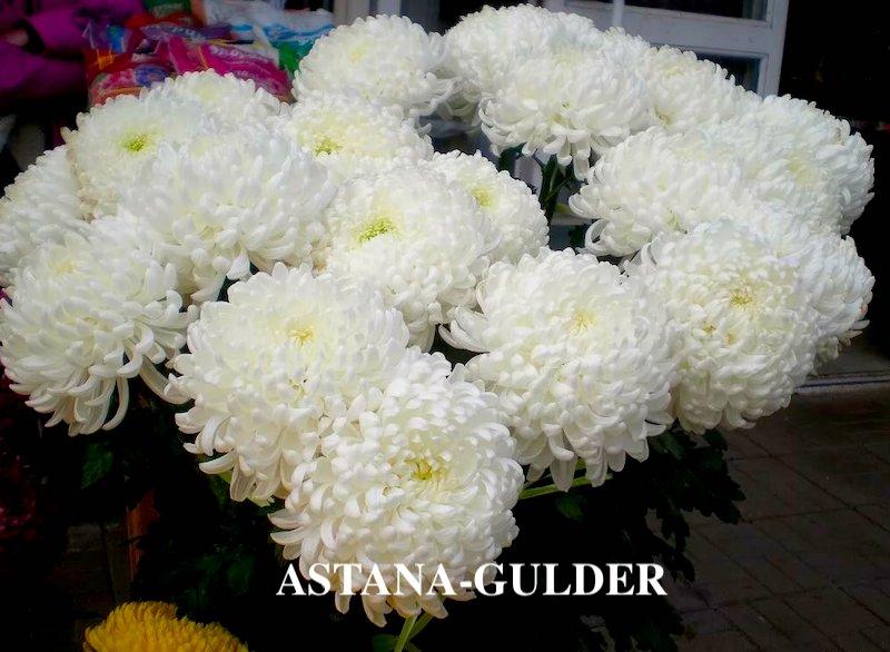 доставка хризантем в астане АSTANA-GULDER
