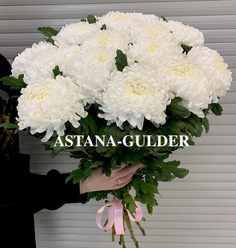 хризантемы астана